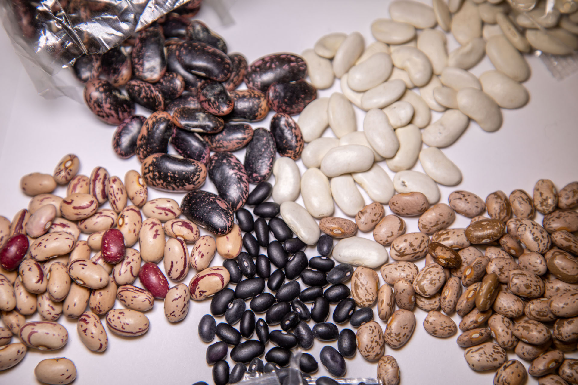 A few varieties of beans from Rancho Gordo's heirloom farm including pinto, cranberry and scarlet runners.