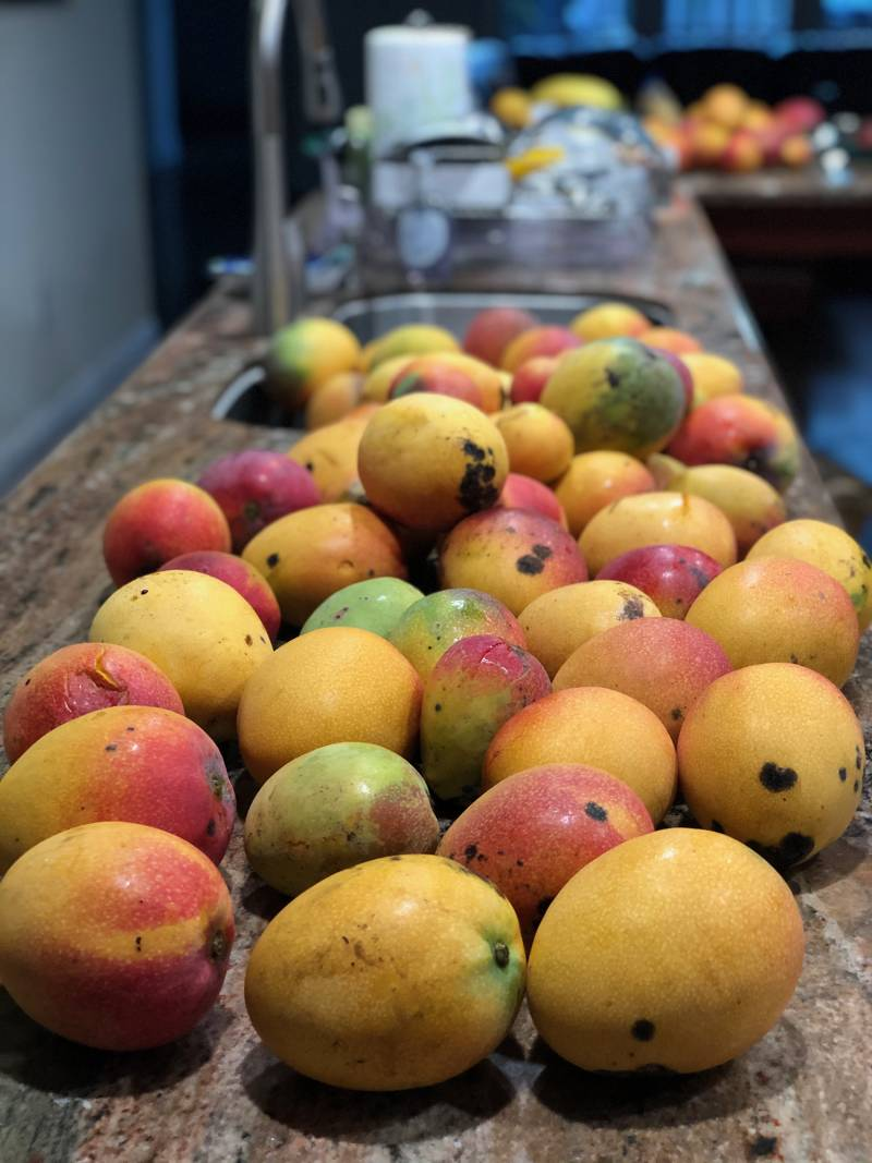 mangoes on a counter