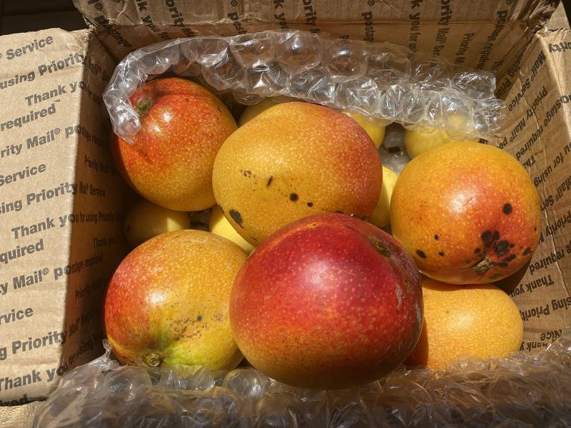 mangoes in a box