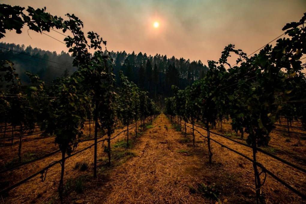 How Wine Country is Adapting to Climate Change - KQED
