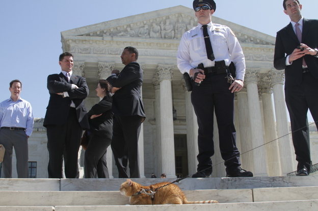 A cat on a leash outside the Supreme Court. (Jessica Marcy: Kaiser Health News)