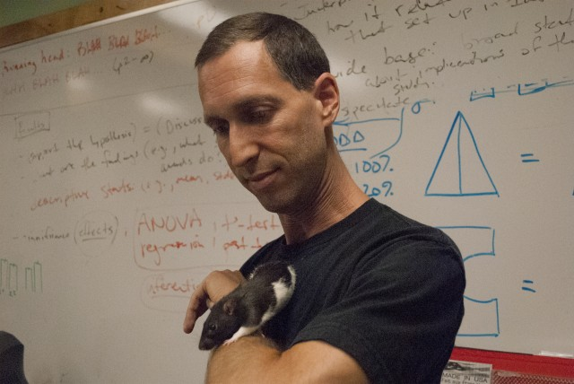 UCLA psychology professor Aaron Blaisdell studied what happened to rats when they were fed a junk food diet. (Photo/Chris Richard)