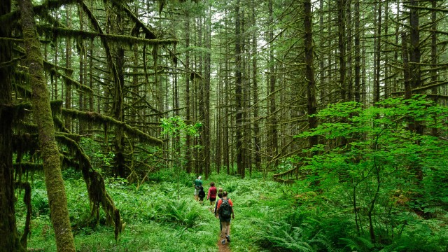 Happiness is about social ties, say experts, like hiking in the woods with friends. (Loren Kerns/Flickr)