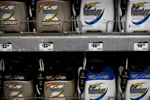 Containers of Roundup, a weed killer by Monsanto Co., are displayed for sale at a Home Depot Inc. store in the Brooklyn borough of New York, U.S., on Friday, Dec. 30, 2011. Monsanto Co., the world's largest seed company, is scheduled to release its first-quarter earnings on Jan. 5.