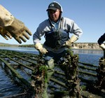 <a href=http://blogs.kqed.org/newsfix/2013/05/14/oyster-farm/ target=_blank >Point Reyes Oyster Farm Gets Its Day in Court</a>