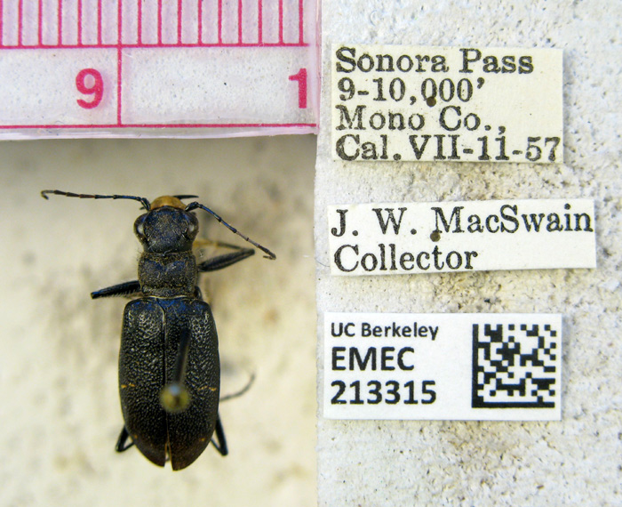 Members of the public help transcribe the labels on each insect. (Image: Essig Museum of Entomology