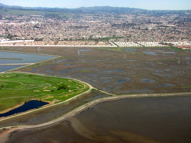 Most of San Francisco Bay's tidal marshes are hemmed in by urban development, making it hard for plants and animals to migrate upslope as seas rise. (Photo: Craig Miller)