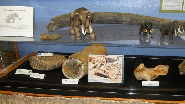 mammoth bones at the CNHM