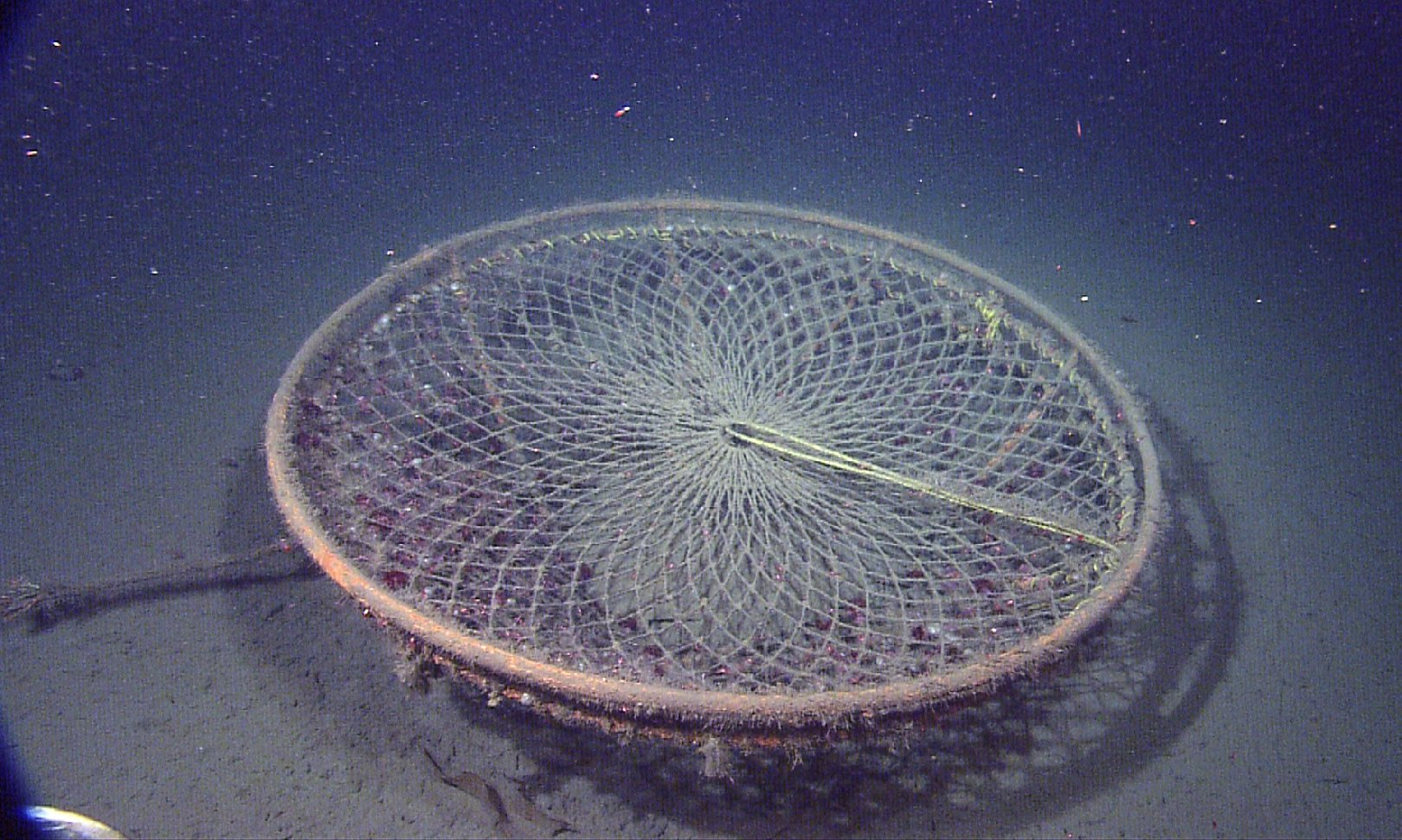 This crab trap was found in Astoria Canyon, off the coast of Oregon, at a depth of 3,580 feet. (MBARI)