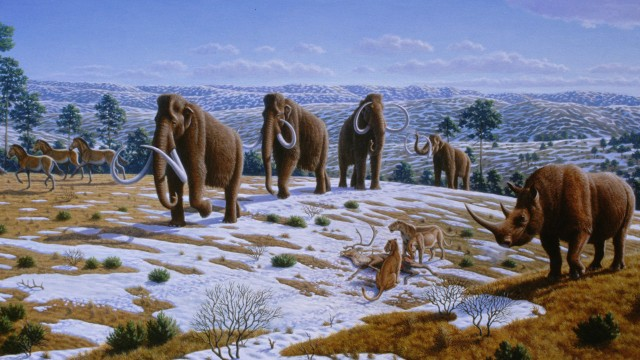 Woolly mammoths thrived during the last ice age until planetary warming--which the most recent evidence suggests came from a meteorite--killed them off thousands of years ago. (Image: Mauricio Anton, PLOS Biology)