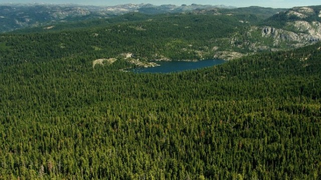Yosemite Fire Threatens Key Forest Research Site