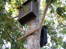These bat boxes at Del Valle Regional Park house two different colonies of bats.  Photo courtesy of EBRPD.