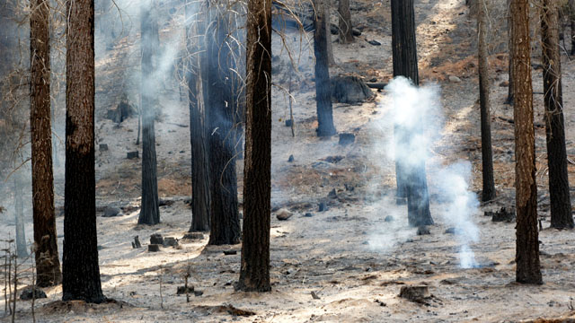 A hot spot smolders in the Rim Fire (Photo: Lauren Sommer/KQED)