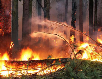 (Photo: Mike McMillan, USFS)