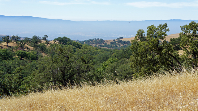 Warming Climate Could Transform Bay Area Parks and Open Space