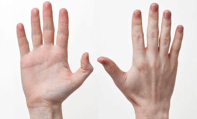 A group of researchers may have found a new set of genes that help to explain why people are usually right handed.  Image courtesy of Wikimedia Commons.
