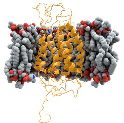 The molecule in yellow, CCR5, may be the key to an eventual cure for AIDS.  Image courtesy of Wikimedia Commons.
