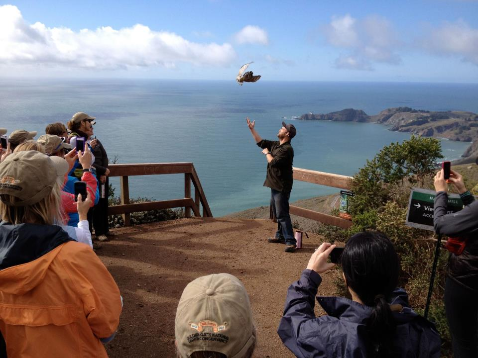 The Golden Gate Raptor Observatory Banding Program Manager, Chris Briggs, releases a Cooper's hawk (Accipiter cooperii) for onlookers. Photo courtesy of the Golden Gate Raptor Observatory