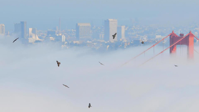Winter is Coming, so the Annual Raptor Migration Through the Bay Area Has Begun