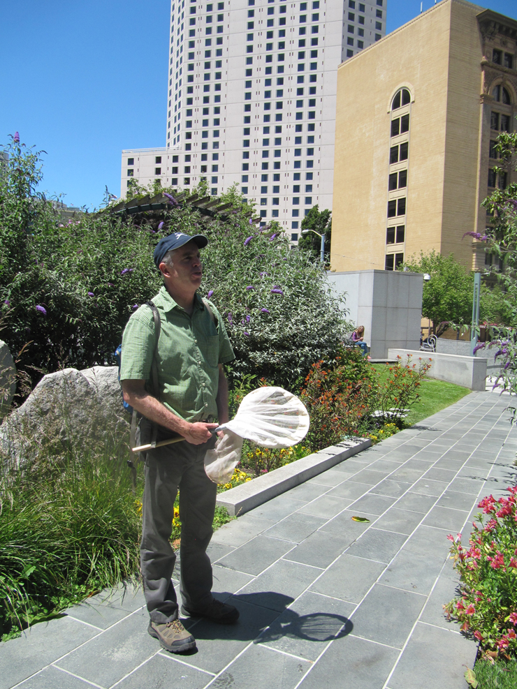 Liam O'Brien on the hunt for butterflies in Yerba Buena gardens in downtown San Francisco. (Molly Samuel/KQED)