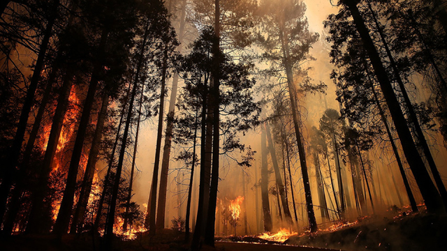 California's Fire History Written in the Trees