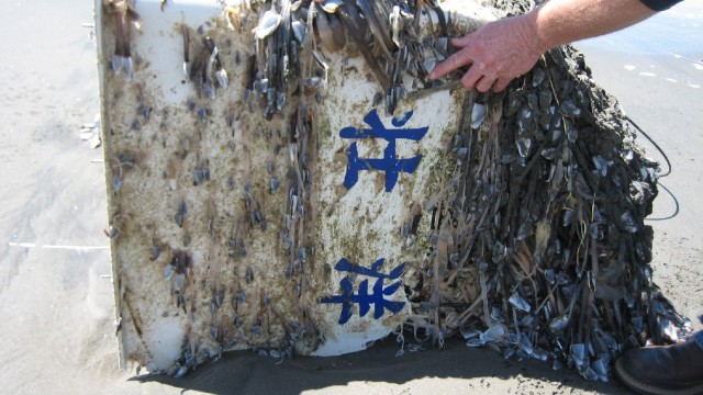 Tsunami Debris May Be Mixed in With the Local Trash at This Year's Beach Cleanup