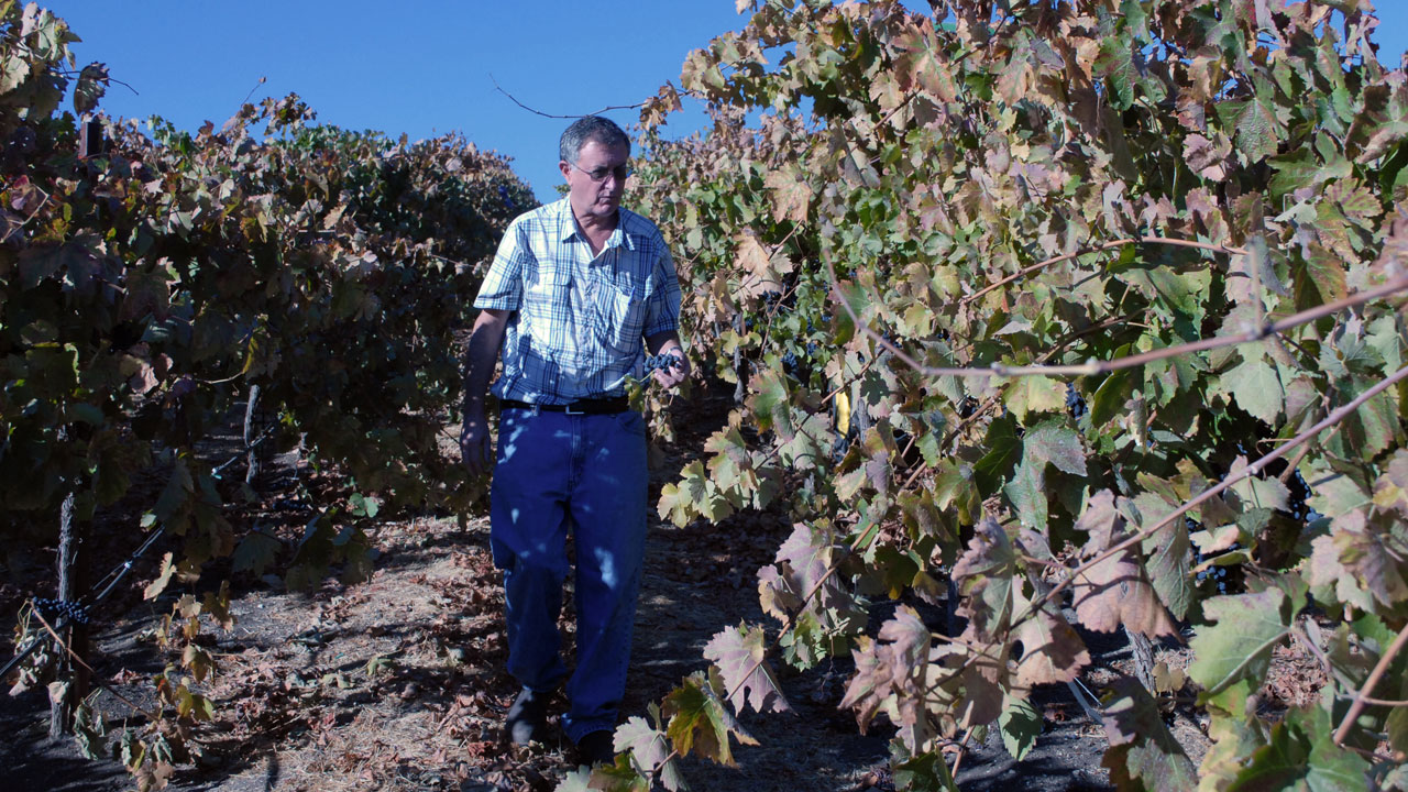 "Seventh-generation farmer Dana Merrill says grapes have been a ""godsend,"" because they sell for a high enough price that his family can afford to stay in farming. (Photo: Chris Richard)"