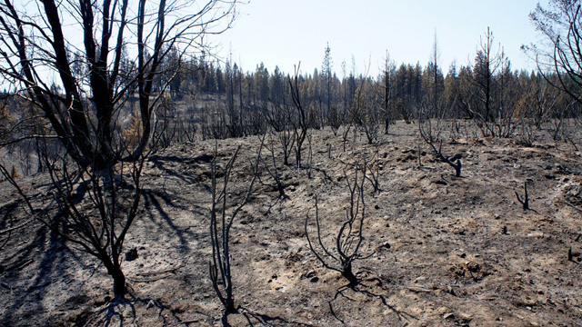 Forest Fires Before And After