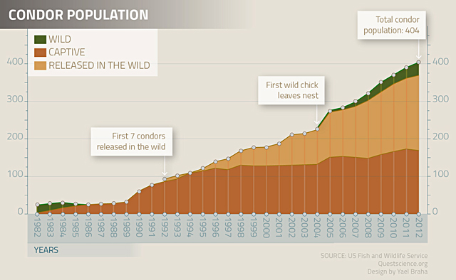 condor-population