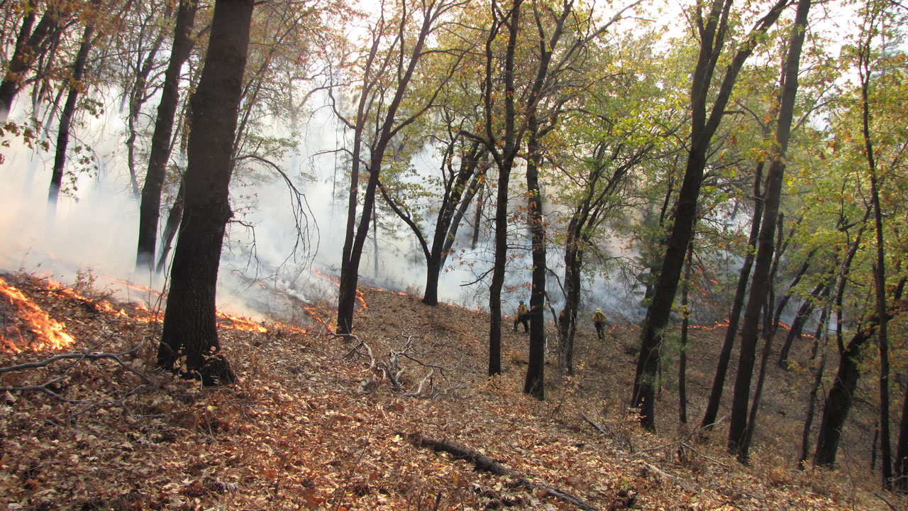 The firefighters set the fire in spots then let it spread uphill. (Molly Samuel/KQED)