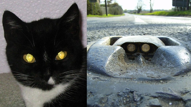Two kinds of cats' eyes. Both are non-negotiably creepy. Photos in the public domain.