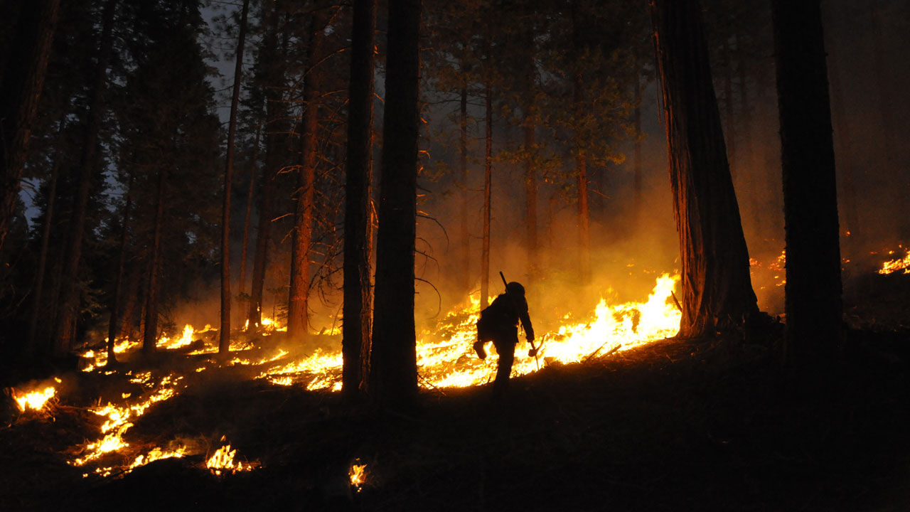 A nighttime prescribed burn in the Stanislaus National Forest in California's Sierra Nevada. (Eric Knapp/U.S. Forest Service)
