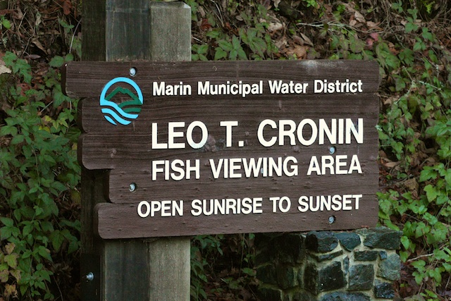 From December to February, Leo T. Cronin is one of the best places to view salmon spawning.  The trail alongside the creek is longer than other local salmon viewing sites, and there is more signage to learn about the species. Photo by Rachael Rufino