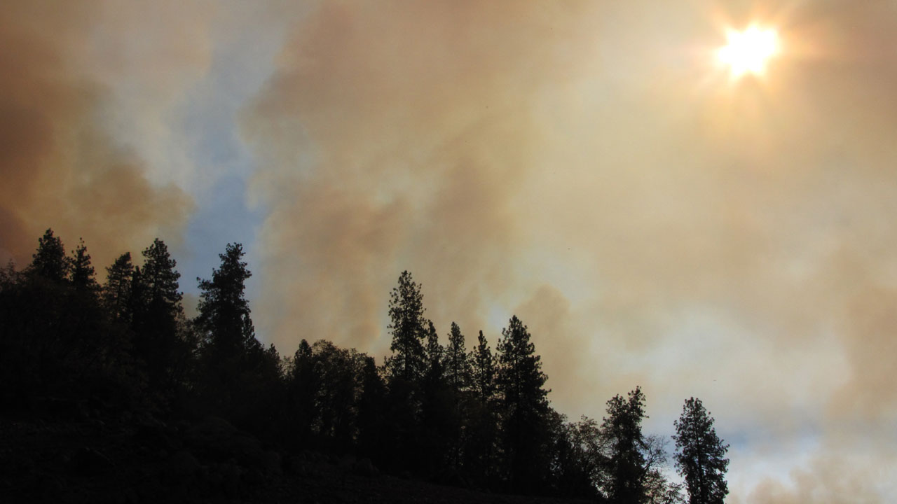 Smoke rises from the prescribed burn at the Shasta National Forest. (Molly Samuel/KQED)