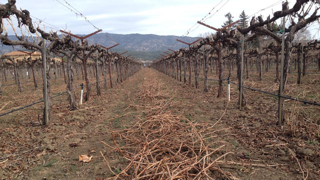 drought vineyard california napa craig miller