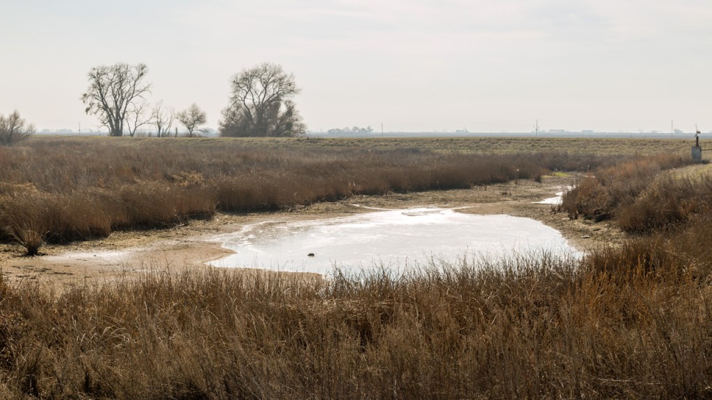 In many years, this channel connecting the San Joaquin River outside of Los Banos runs dry. (Josh Cassidy/KQED)
