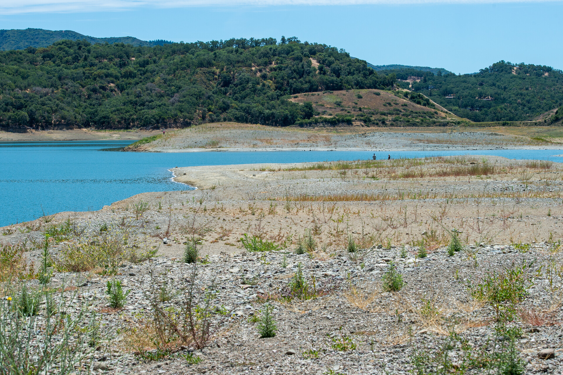 New vegetation grows on what was once the lake bed of Lake Mendocino on June 11, 2021.