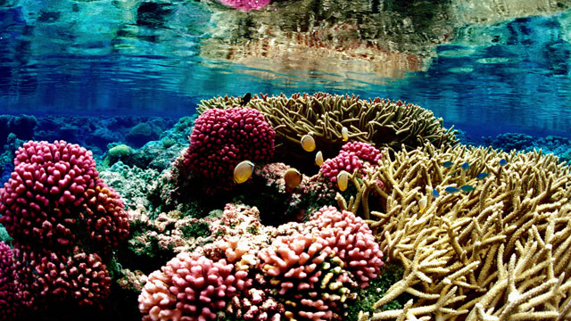 Coral Reef at Palmyra Atoll National Wildlife Refuge (Jim Maragos/U.S. Fish and Wildlife Service) http://www.flickr.com/photos/usfwspacific/5565696408/