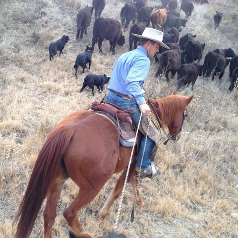 Joe Morris moved his cows from a ranch where there wasn't enough water to sustain them. (Vinnee Tong/KQED)