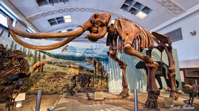 Natural History Museum In Slc