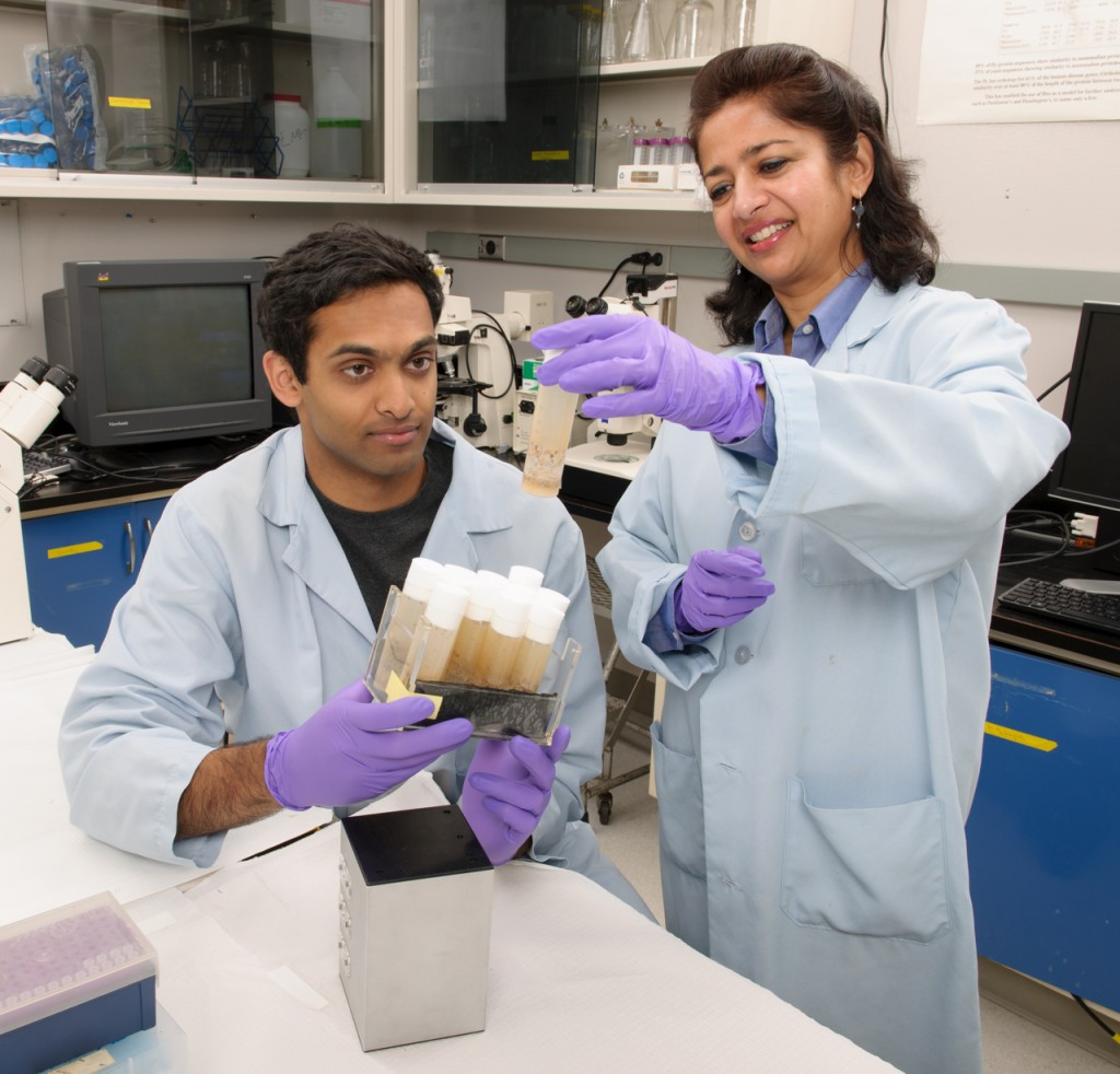 Ames researchers Curran Reddy and Sharmila Bhattacharya are studying the effects of zero gravity on fruit flies' cardiovascular systems. (Dominic Hart/NASA)