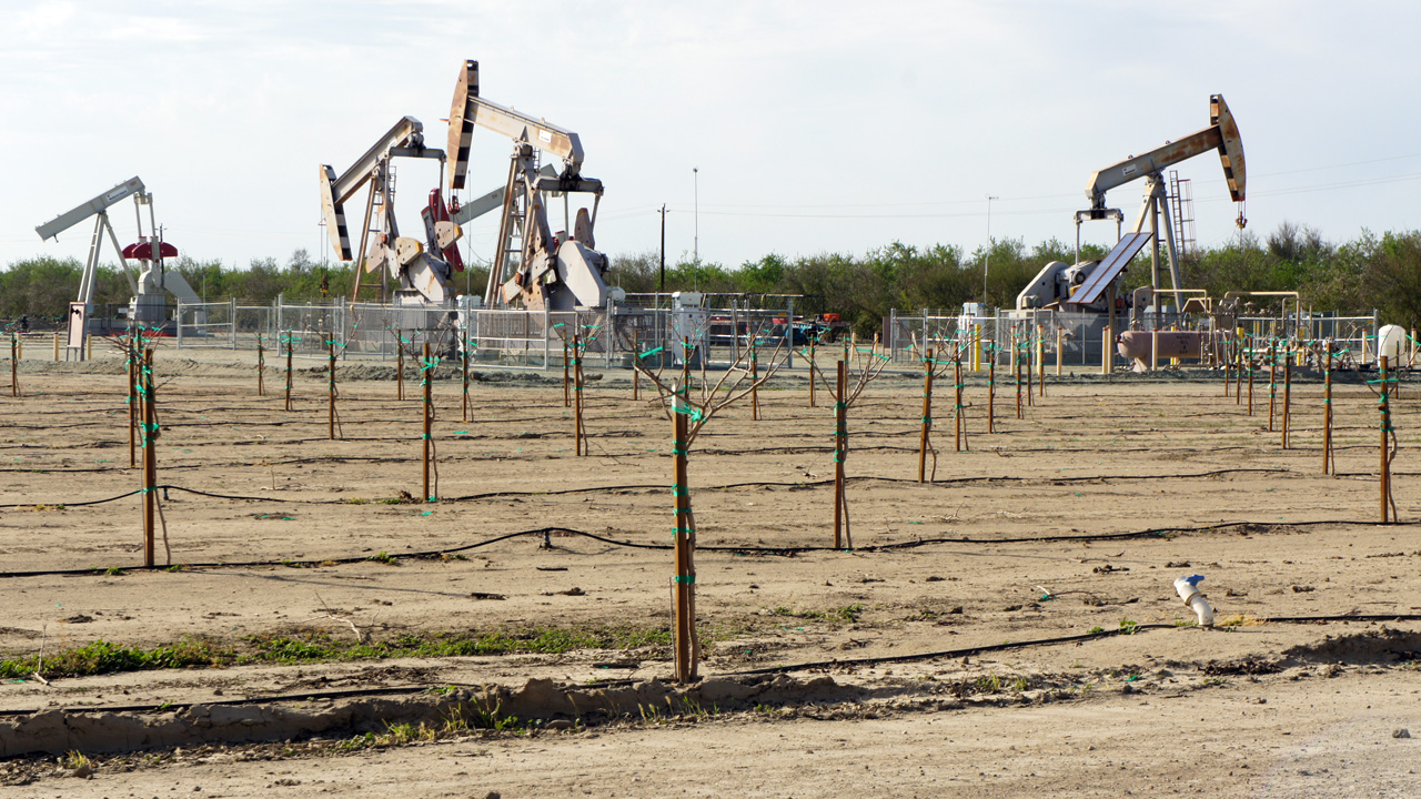 Oil wells in the Rose oil field near Wasco, California. The Monterey Shale is two miles below the surface. (Lauren Sommer/KQED)