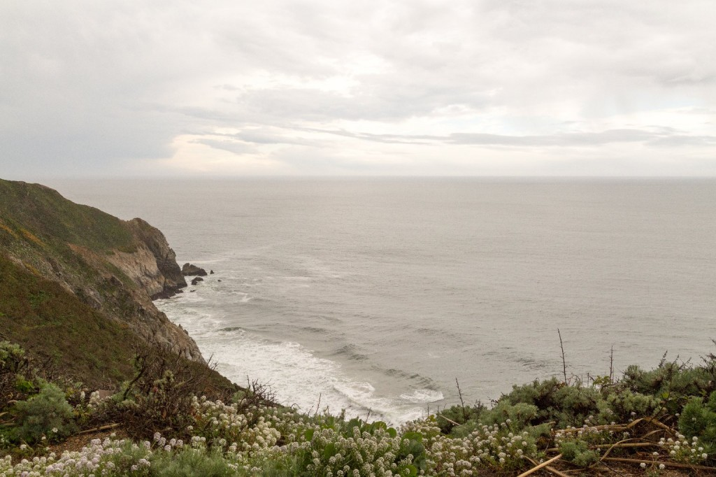 The trail features a fantastic array of wildlife and stunning views of the coast. (Josh Cassidy/KQED)