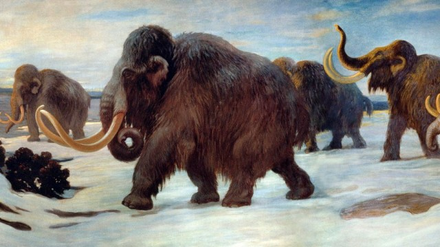 Woolly mammoths near the Somme River, AMNH mural. (Charles R. Knight/AMNH)