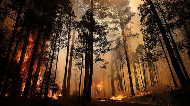 California Wildfire Study: Spend on Prevention to Save on Disasters