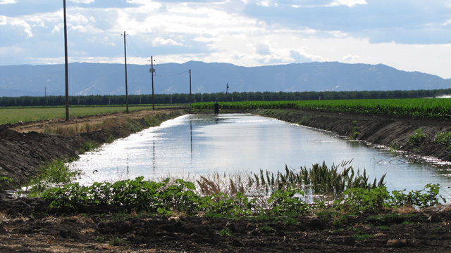An irrigation ditch in the Central Valley. When surface water is scarce, farmers pump more groundwater to make up the difference. (Craig Miller/KQED)