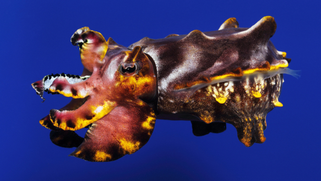 """World's Largest """"Tentacles"""" Exhibit at Monterey Bay Aquarium Will Cultivate Its Own Cephalopods"""