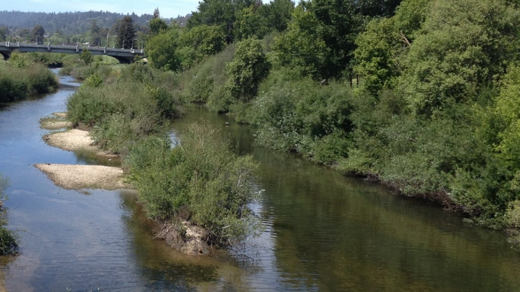 The San Lorenzo River is the main source of supply for Santa Cruz residents.  (Amy Standen/KQED)