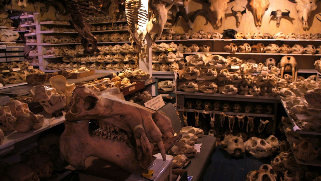 Bandar has almost 7,000 skulls and skeletons in his San Francisco basement