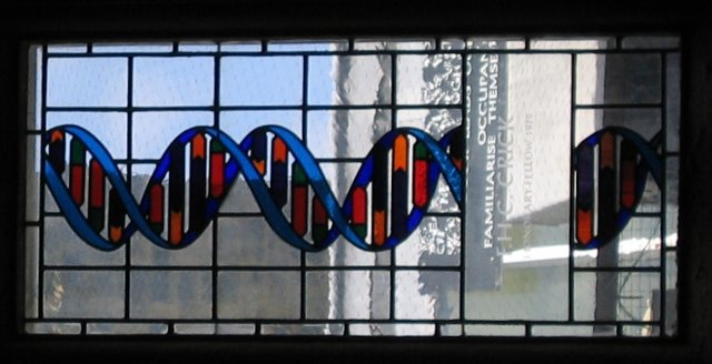 The DNA in this stained glass may need two new colors to represent two new bases.  (Wikimedia Commons/Schutz)